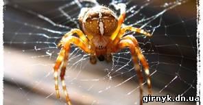 В Донбассе крупные оранжевые пауки нападают на людей