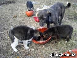 приют для животных в Украинске