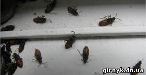 Донбасс атакуют странные жуки - больно кусают и не реагируют на отраву