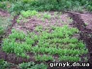 Марьинские правоохранители изъяли у сельчанина более 1000 растений снотворного мака